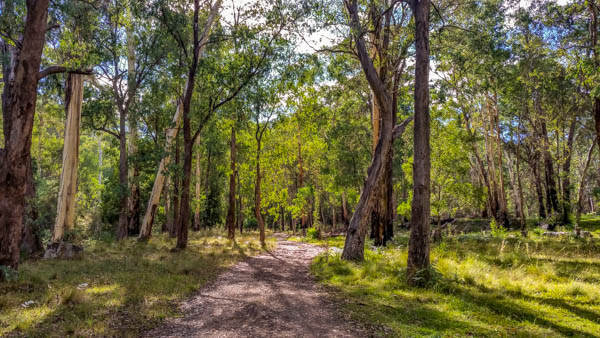 dirt track lined with trees at Timbarra free camping site