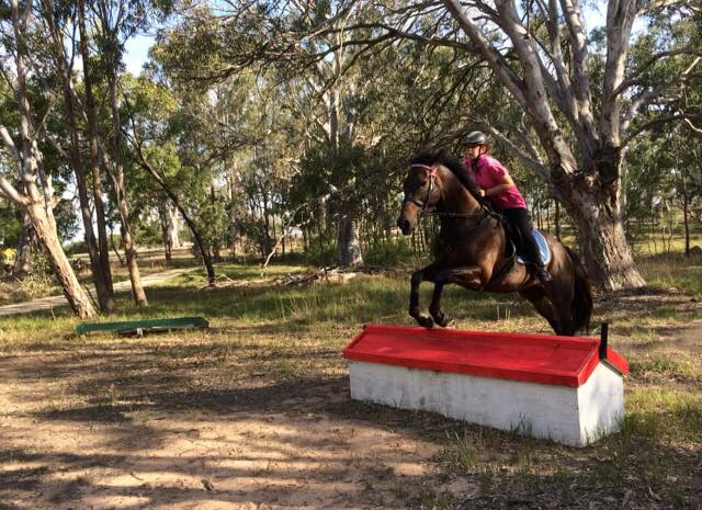 A young girls taking her horse for a ride through the Aussie bush and jumping over a low lying red and white jump. The horse has it's front legs up and the girl is leaning forward