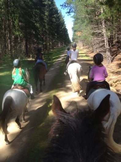 There are 5 children enjoying a horse ride in Gippsland through the pine plantations. They are all on different coloured horses and the picture is taken from someone also on a horse. You can see the picture taken over the horses ears