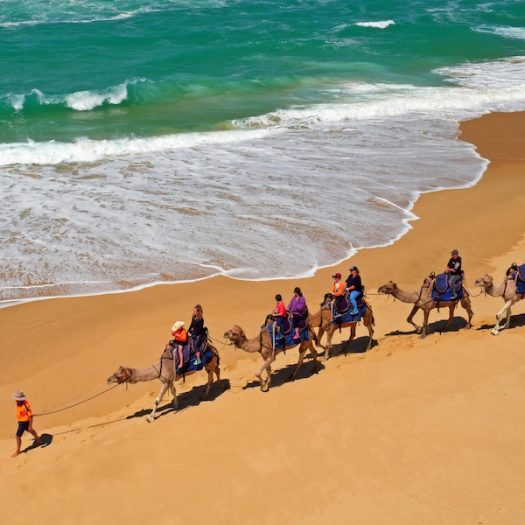 Camels on the beach in Lakes Entrance
