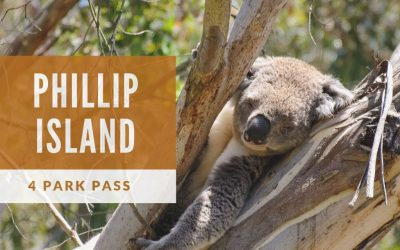 4 Park Pass for Phillip island