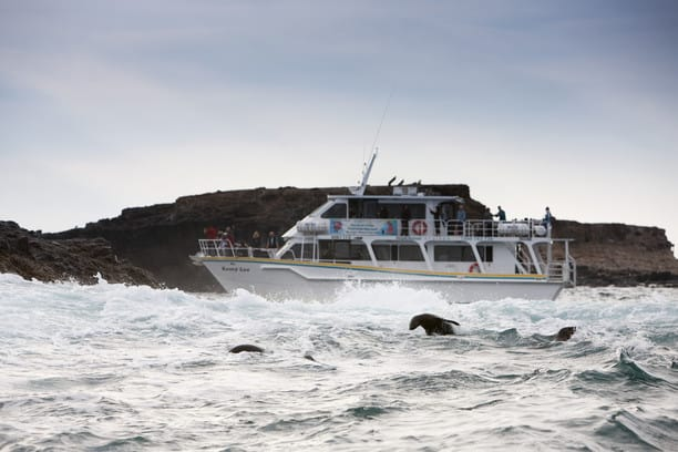 A boat in choppy waters with seals swimming around it